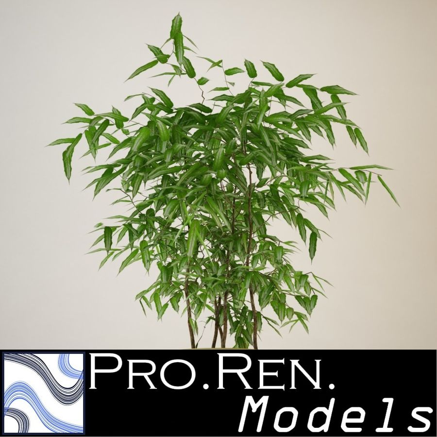 Plant for architectural interiors type I royalty-free 3d model - Preview no. 1