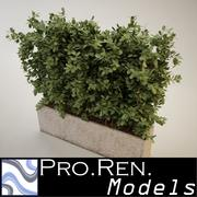 Plant for architectural interiors type H 3d model