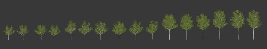 Betula royalty-free 3d model - Preview no. 6