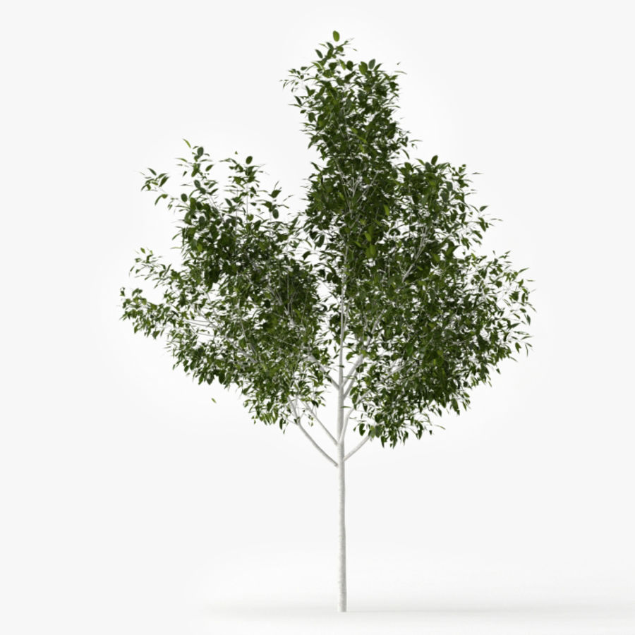Betula royalty-free 3d model - Preview no. 1