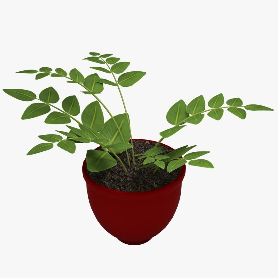 鉢植えの家の植物 royalty-free 3d model - Preview no. 1