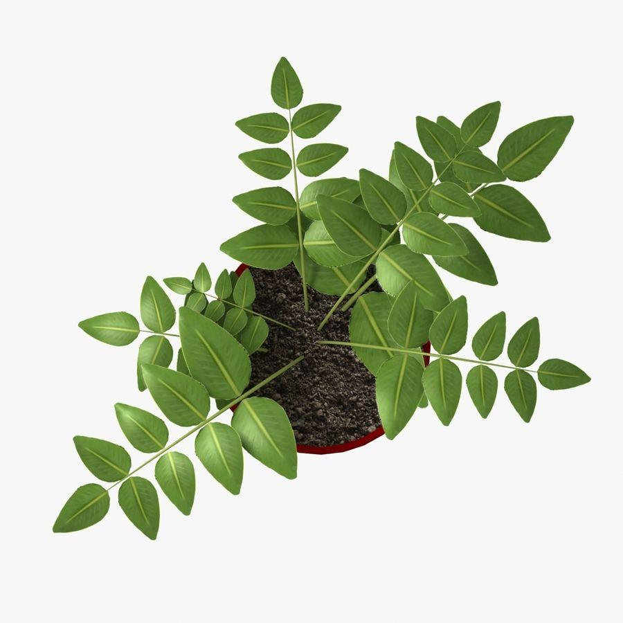 鉢植えの家の植物 royalty-free 3d model - Preview no. 5