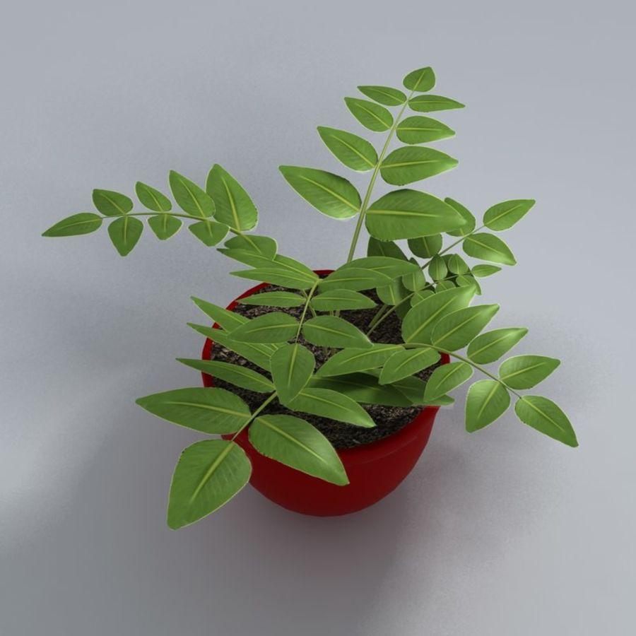 鉢植えの家の植物 royalty-free 3d model - Preview no. 6