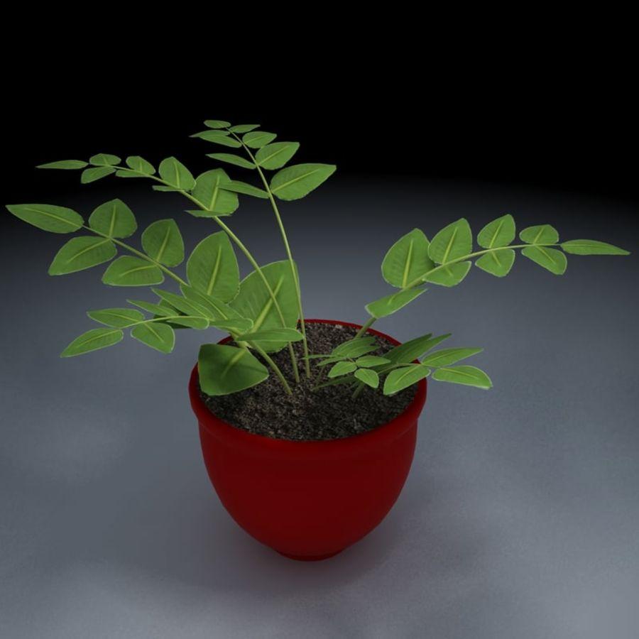 鉢植えの家の植物 royalty-free 3d model - Preview no. 2