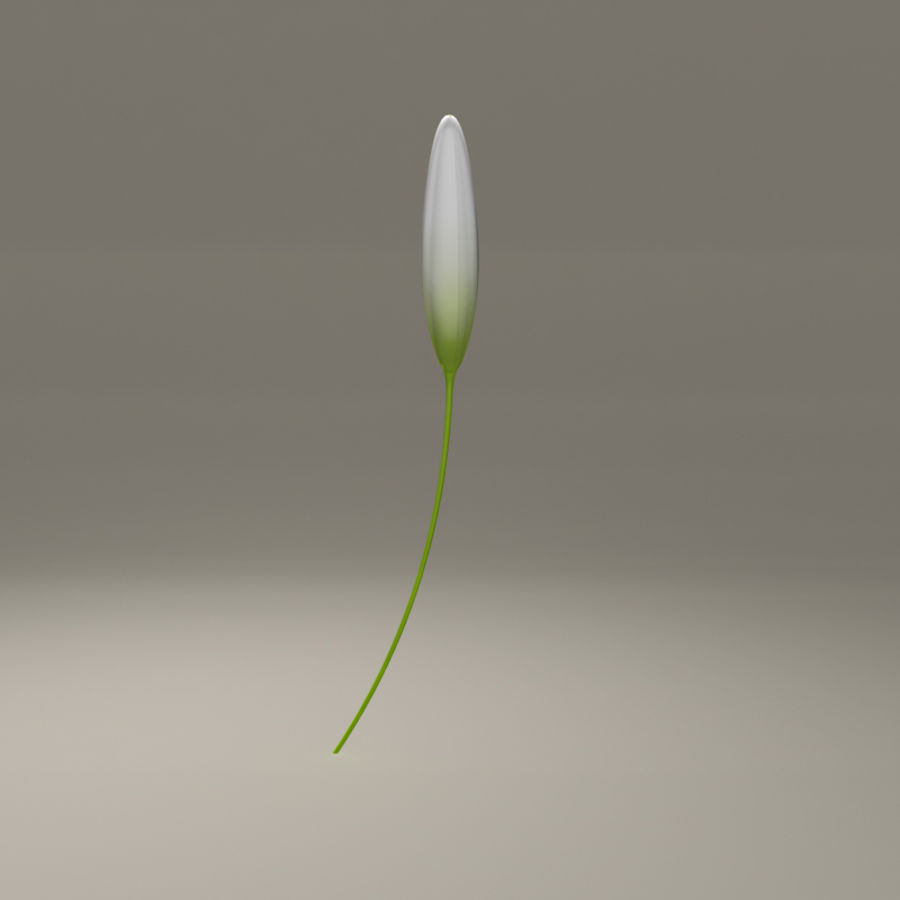 Blooming Lily Flower royalty-free 3d model - Preview no. 3
