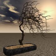 Bonzai Tree 3d model