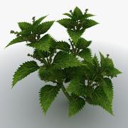 Stinging Nettles 3d model