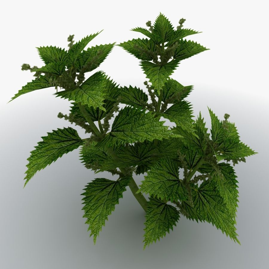 Stinging Nettles royalty-free 3d model - Preview no. 1