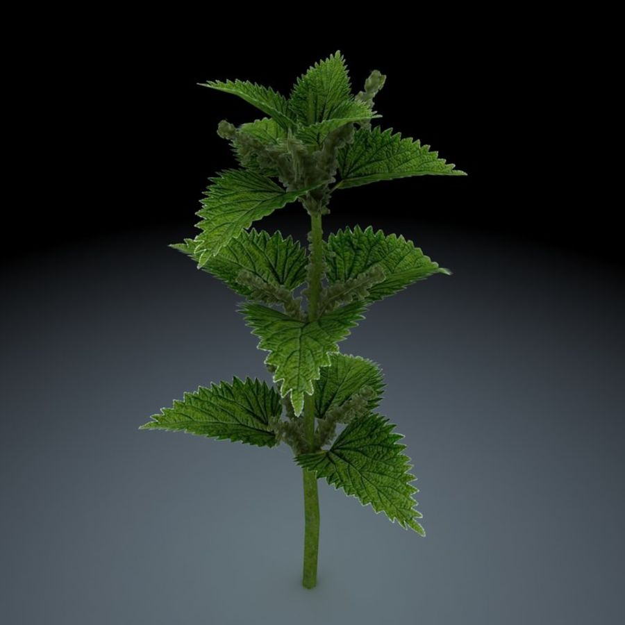 Stinging Nettles royalty-free 3d model - Preview no. 3