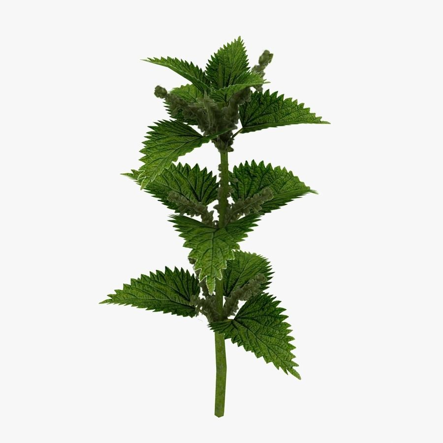 Stinging Nettles royalty-free 3d model - Preview no. 2