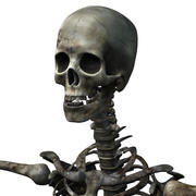 Undead skeleton 3d model