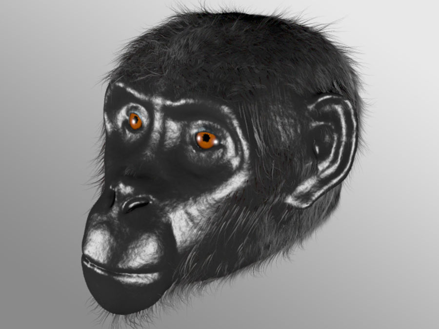 Ape Head royalty-free 3d model - Preview no. 9