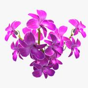 Orchideebloemen 3d model