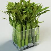 bamboo Bambuseae 3d model