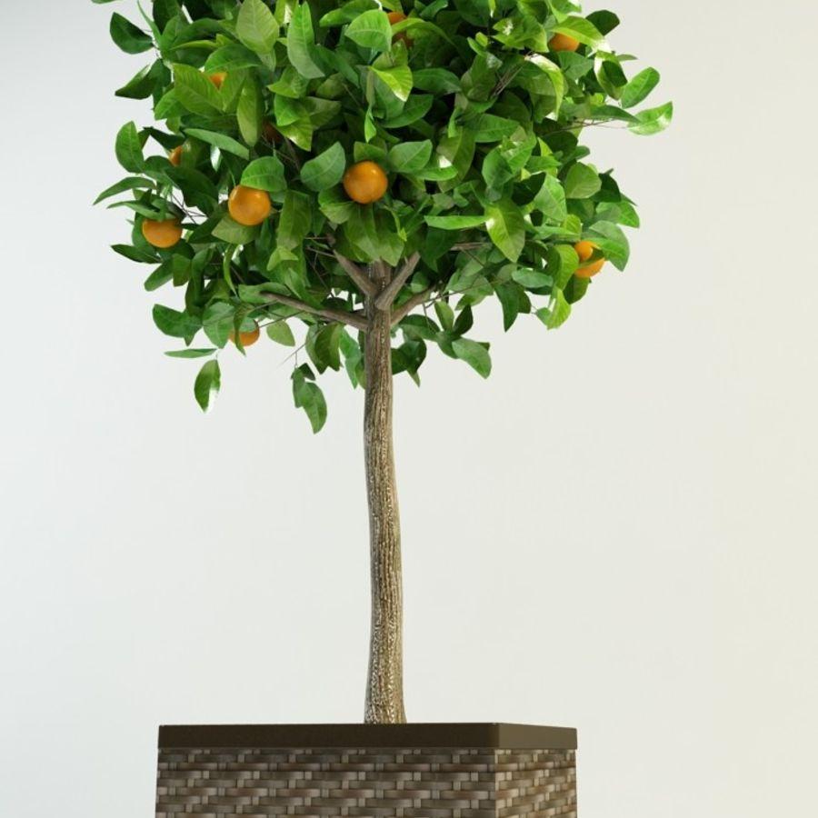 orange tree citrus royalty-free 3d model - Preview no. 2