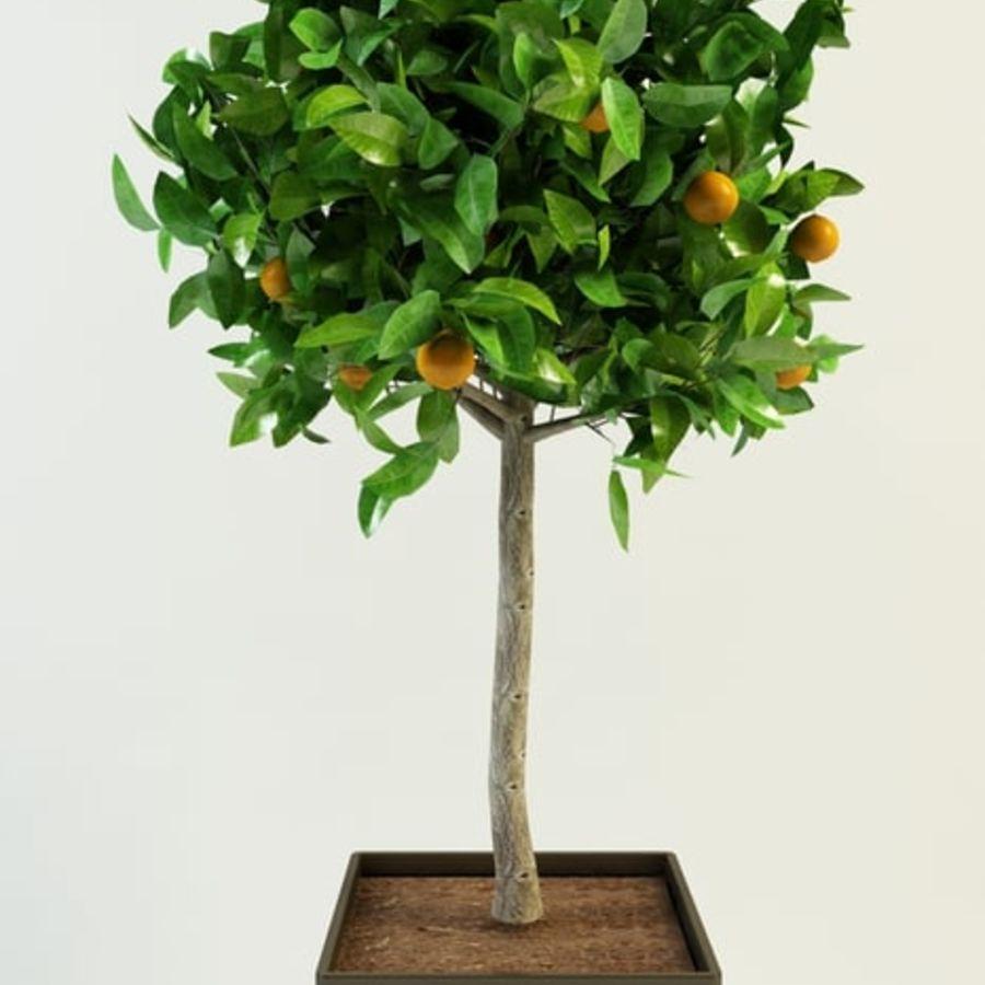 orange tree citrus royalty-free 3d model - Preview no. 1