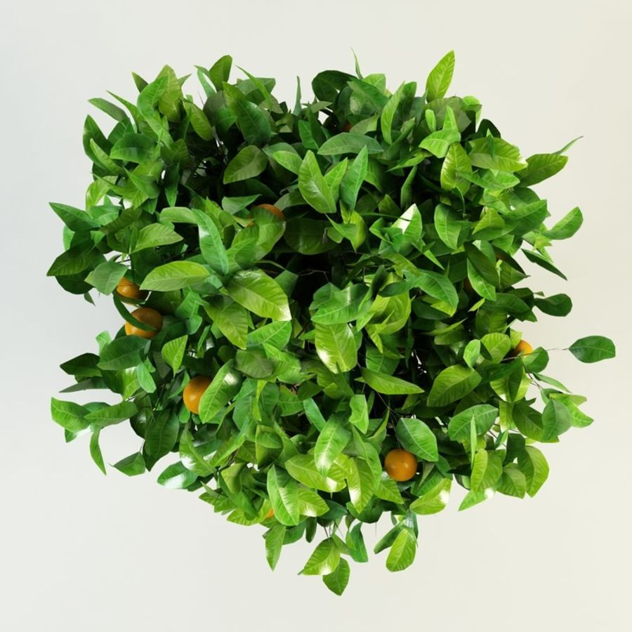 orange tree citrus royalty-free 3d model - Preview no. 4
