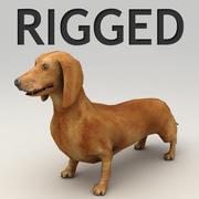 Dachshund rigged 3d model