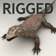 Monitor lizard rigged 3d model
