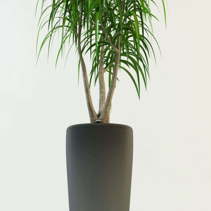 dracaena palm royalty-free 3d model - Preview no. 3