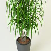 dracaena palm 3d model