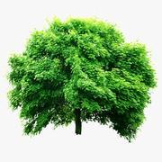 Tree 00 3d model