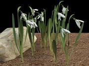 galanthus Snowdrop 3d model