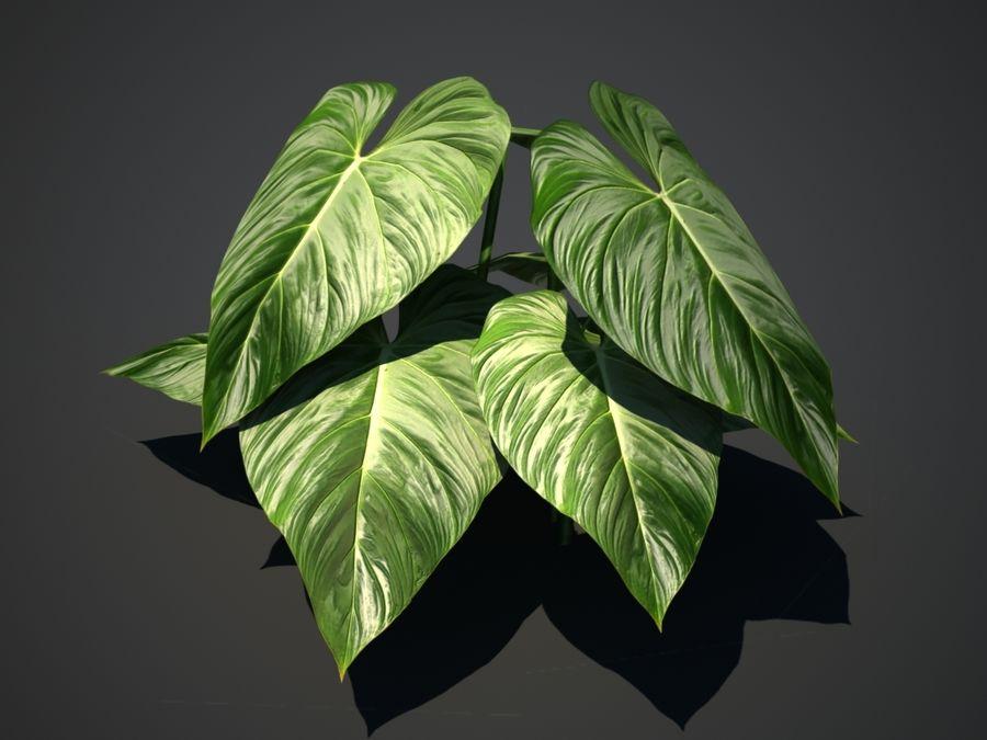 Тропическое растение royalty-free 3d model - Preview no. 1