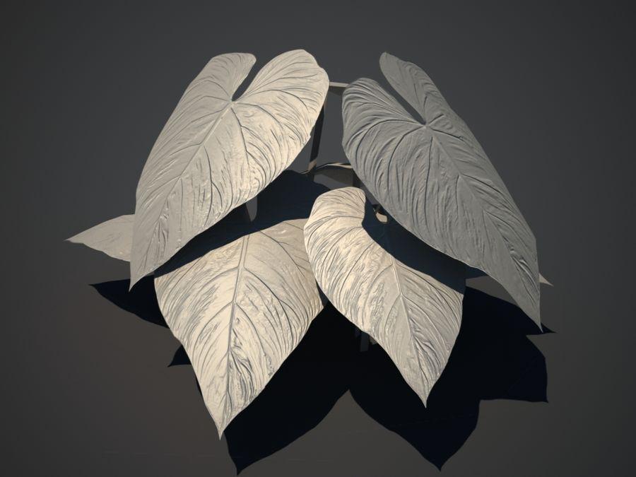 Тропическое растение royalty-free 3d model - Preview no. 3