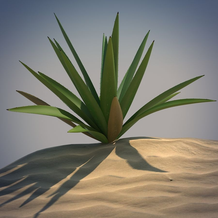 Desert Spikeplant royalty-free 3d model - Preview no. 1
