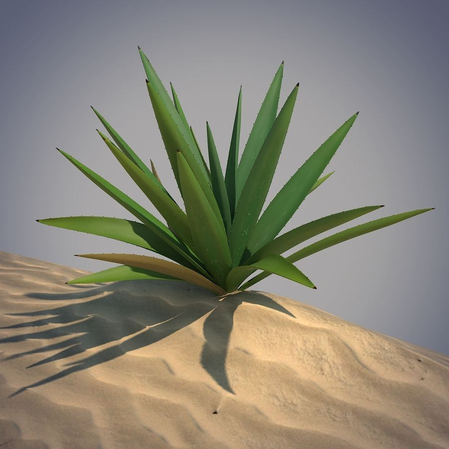 Desert Spikeplant royalty-free 3d model - Preview no. 2