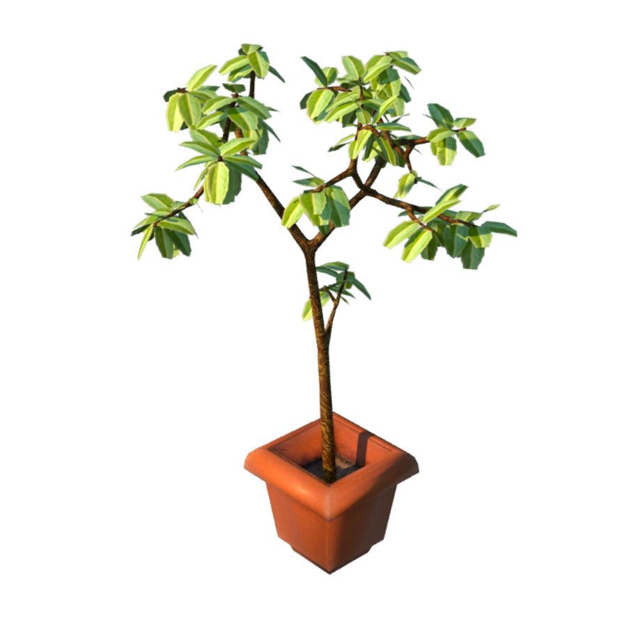 Pot Plant royalty-free 3d model - Preview no. 1