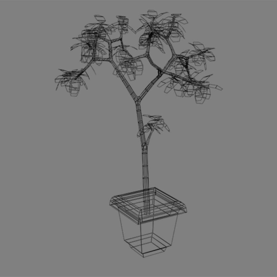 Pot Plant royalty-free 3d model - Preview no. 8