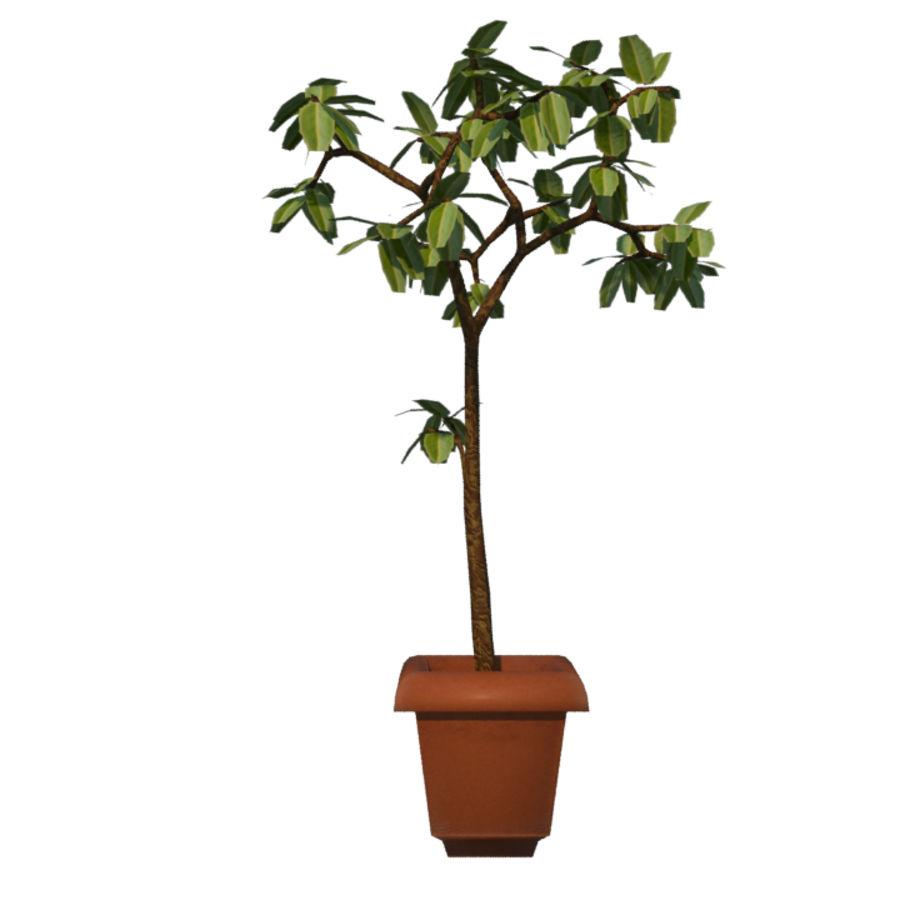 Pot Plant royalty-free 3d model - Preview no. 5
