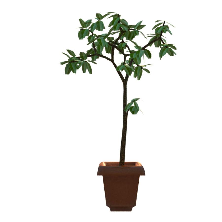 Pot Plant royalty-free 3d model - Preview no. 4