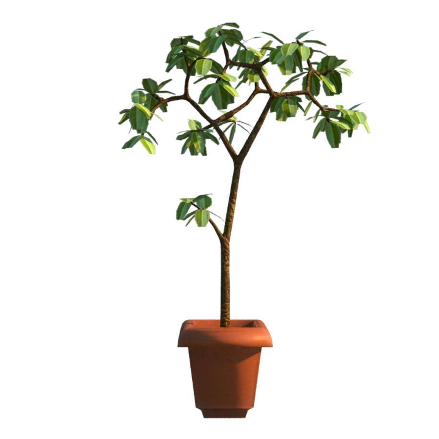 Pot Plant royalty-free 3d model - Preview no. 2