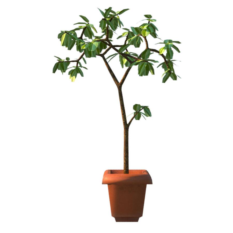 Pot Plant royalty-free 3d model - Preview no. 3