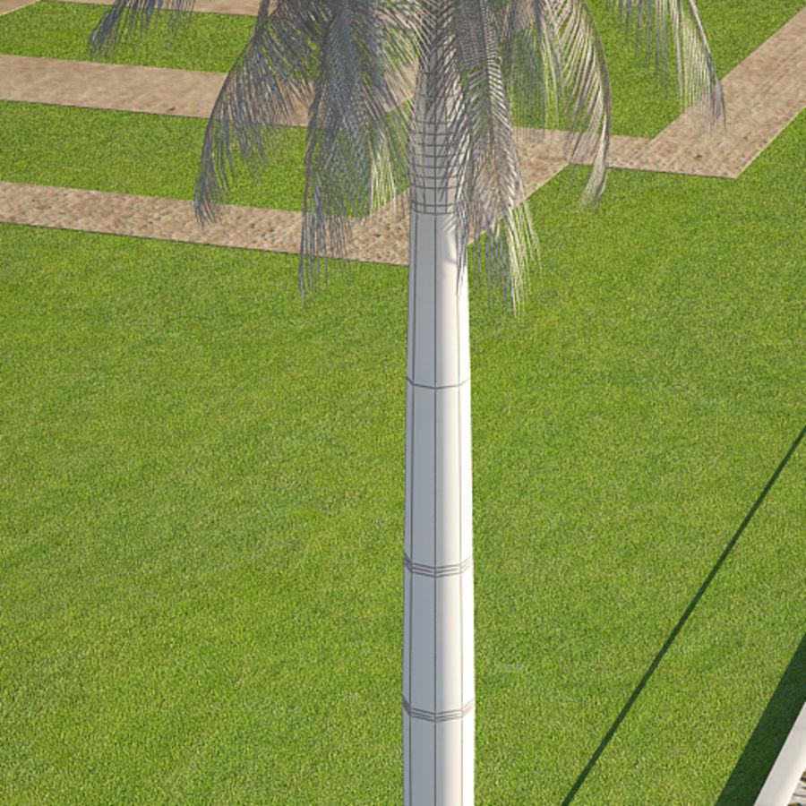 Royal Palm royalty-free 3d model - Preview no. 5