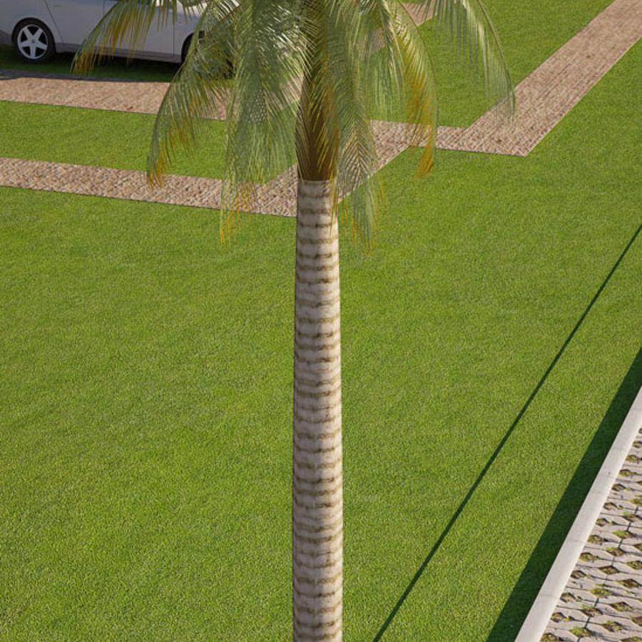 Royal Palm royalty-free 3d model - Preview no. 3