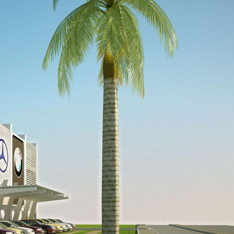 Royal Palm royalty-free 3d model - Preview no. 2