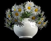 camomille matricaria dans vase 3d model