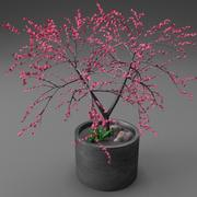 Young potted cherry blossom tree 3d model