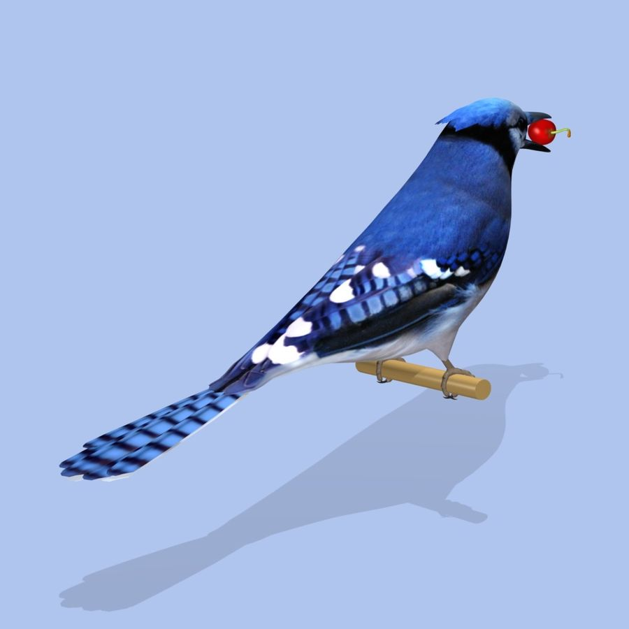 AB Blue Jay SA royalty-free 3d model - Preview no. 2