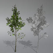 Birch Pack 3d model