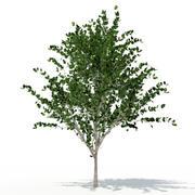 Träd 05 3d model