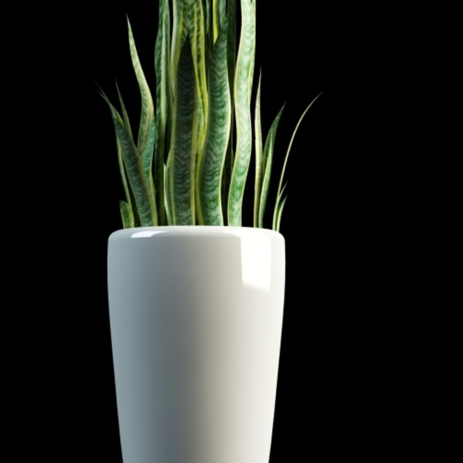 sansevieria snake plant royalty-free 3d model - Preview no. 2