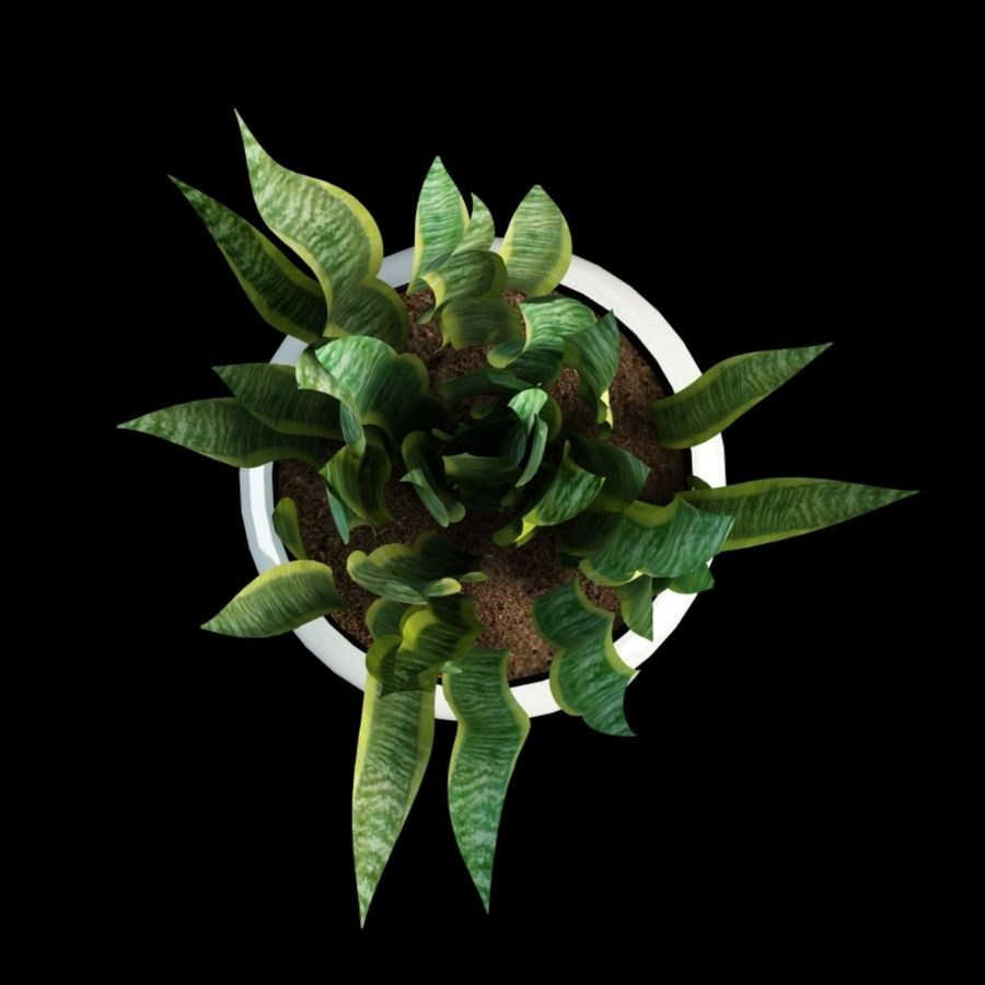 sansevieria snake plant royalty-free 3d model - Preview no. 4
