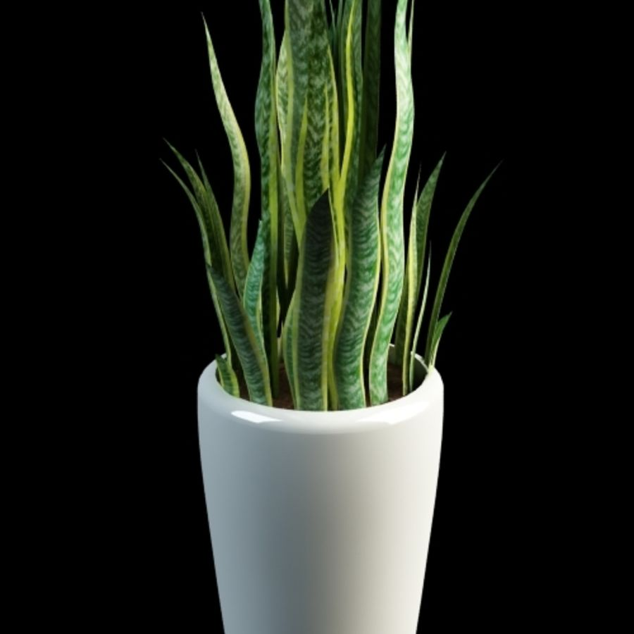 sansevieria snake plant royalty-free 3d model - Preview no. 1