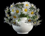 camomile matricaria in vase(1) 3d model