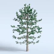 Pinheiro 3d model